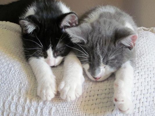 kitties edit