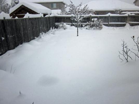 Snow nov 24 2013 001