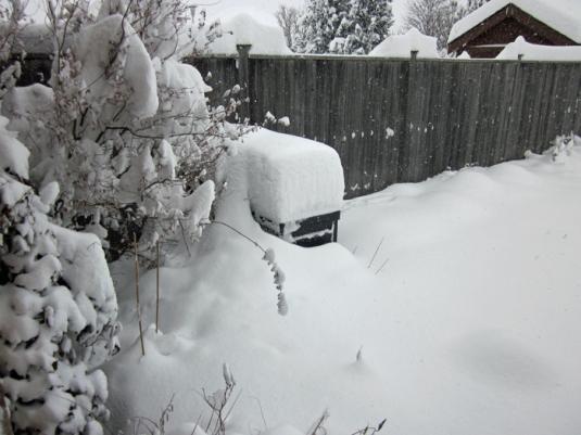 Snow nov 24 2013 002