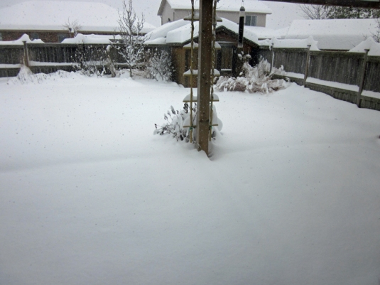 Snow nov 24 2013 005