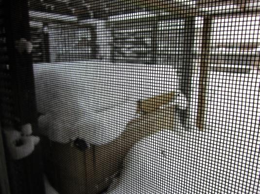 Snow nov 24 2013 006