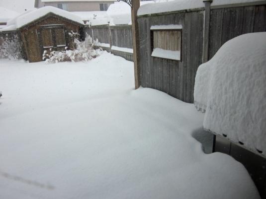 Snow nov 24 2013 007