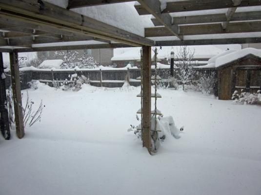 Snow nov 24 2013 008