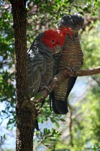 bigbirds