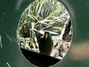 birdhole